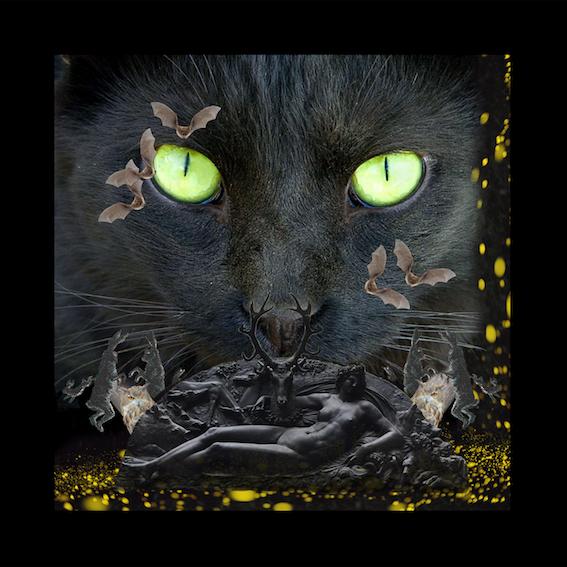 Final Black Cat blog.jpg